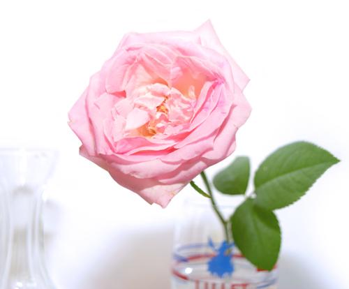 1_ochi_image4-1